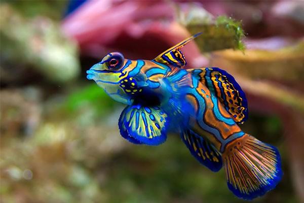 Tengeri akvarisztikai termékek és élőlények