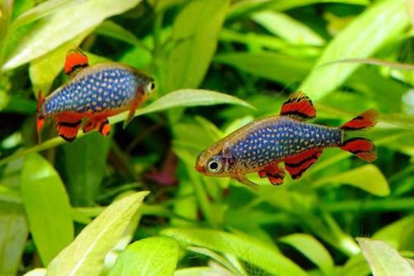 Édesvízi akvarisztikai termékek és élőlények