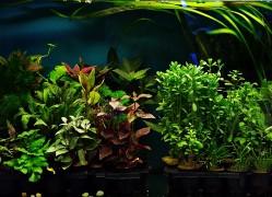 Növények vegyesen