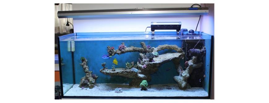 300 Literes korallos tengeri akvárium indítása és folyamatos fejlődése! 10. Bejegyzés!