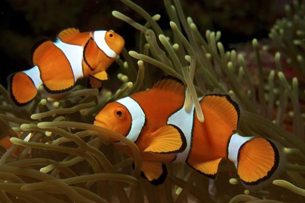 Bohóchalak