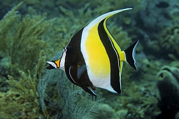 Egyéb halak