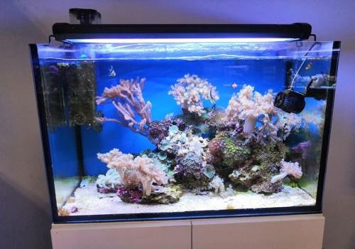 A tengeri akváriumok áramoltatása