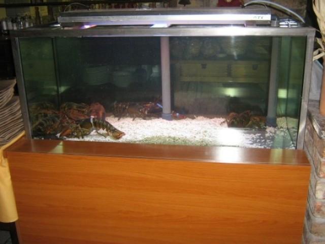 300 literes homártartó tengeri akvárium