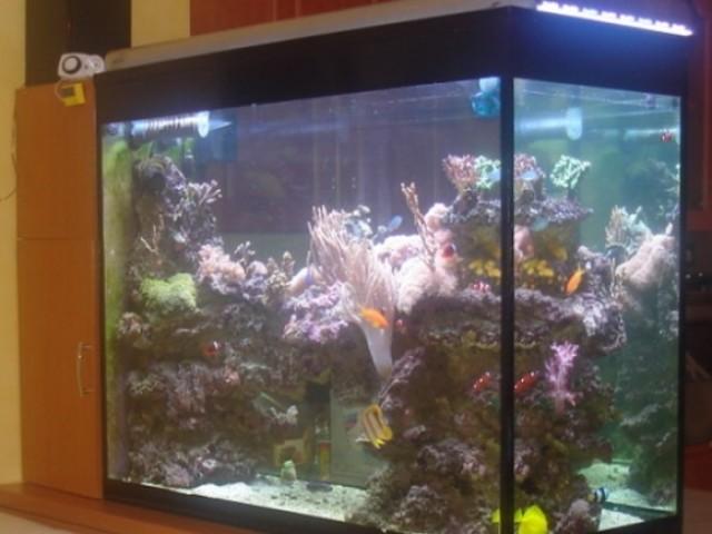 550 Literes tengeri korallos akvárium