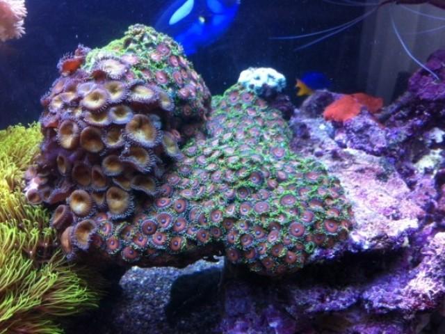 400 literes korallos tengeri akvárium