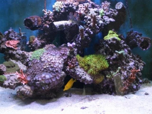 165 literes tengeri akvárium