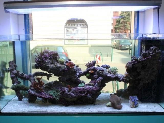 546 literes tengeri kőkorallos akvárium