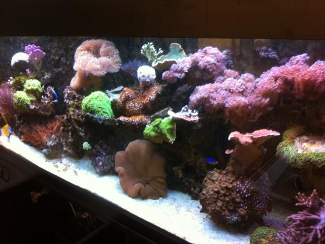 960 literes tengeri korallos akvárium