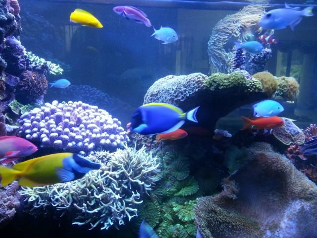 2500 literes tengeri korallos akvárium