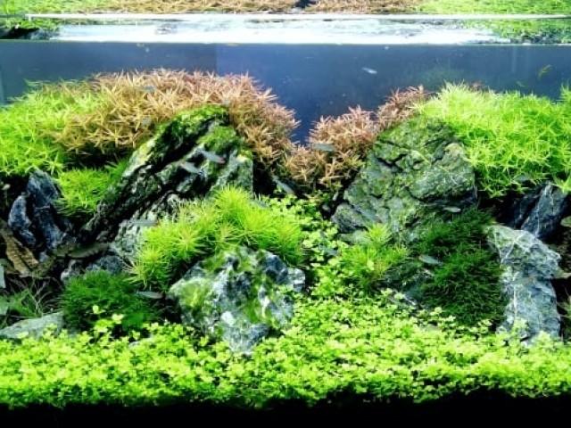 126 literes növényes akvárium optiwhite üvegből