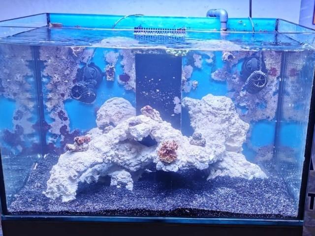 164 literes korallos akvárium