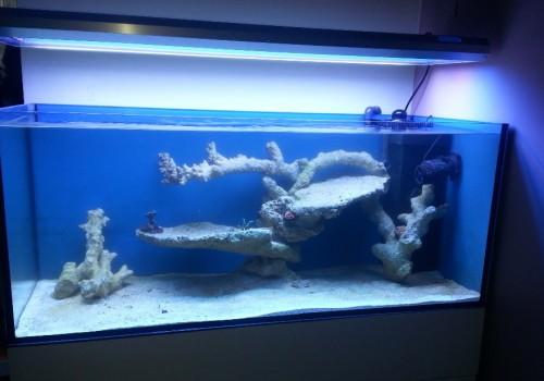 300 Literes korallos tengeri akvárium indítása és folyamatos fejlődése 3. rész