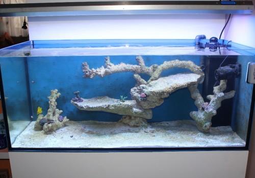 300 Literes korallos tengeri akvárium indítása és folyamatos fejlődése 4. rész