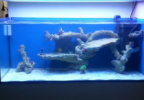 300 Literes korallos tengeri akvárium indítása és folyamatos fejlődése 5. rész