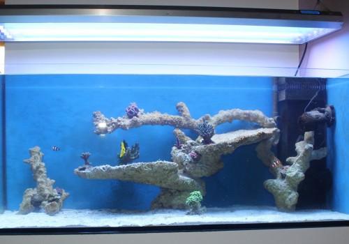 300 Literes korallos tengeri akvárium indítása és folyamatos fejlődése 6. rész