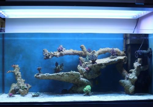 300 Literes korallos tengeri akvárium indítása és folyamatos fejlődése 7. rész