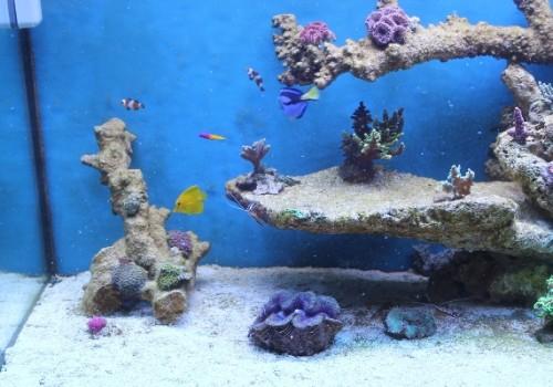 300 Literes korallos tengeri akvárium indítása és folyamatos fejlődése 8. rész