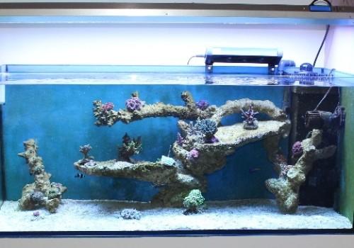 300 Literes korallos tengeri akvárium indítása és folyamatos fejlődése 9. rész