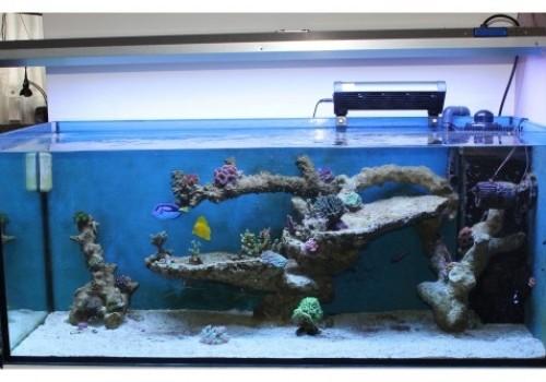 300 Literes korallos tengeri akvárium indítása és folyamatos fejlődése 10. rész