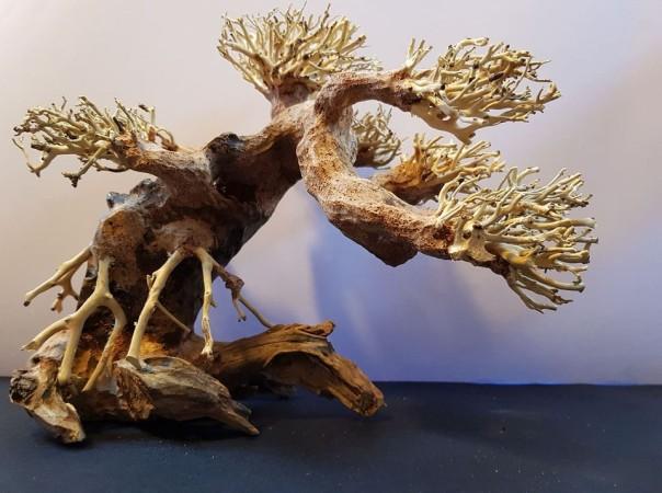 Bonsai Wood M dekorációs fa