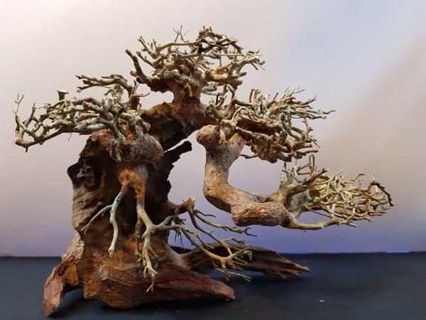 Bonsai Wood S dekorációs fa