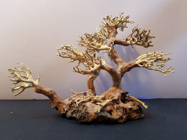 Bonsai Small Family dekorációs fa